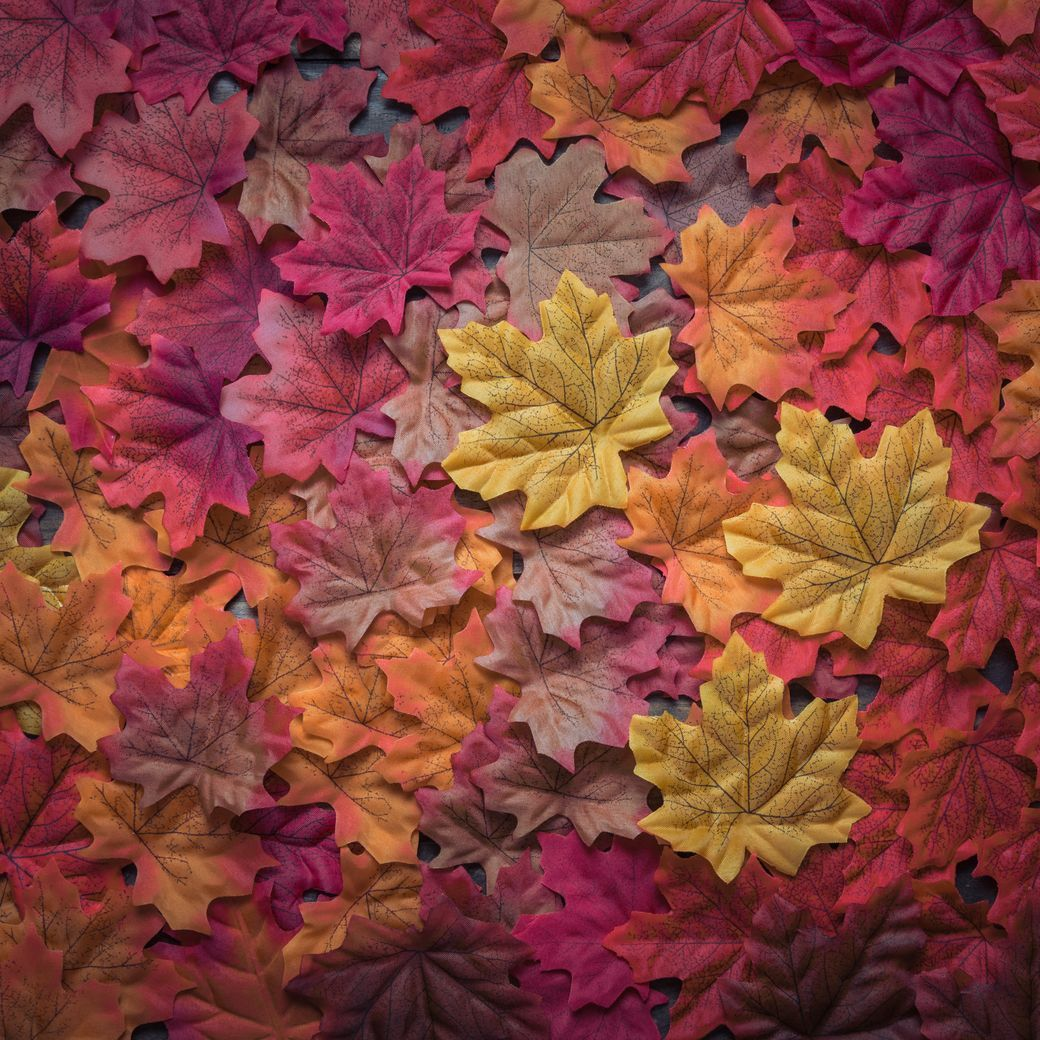 Why Autumn is the Best Time of Year to Hire